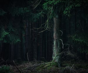 dark, green, and trees image