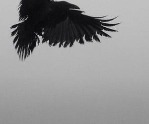 aesthetic, crows, and black image