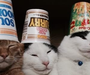 cats, noodles, and noods image