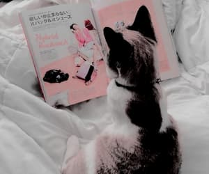 cat, pink, and aesthetic image