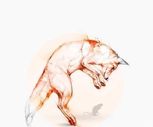 fox, wallpaper, and animal image