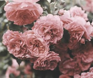 heartache, roses, and twitter image