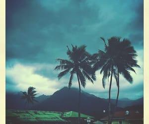 hawaii, rain, and tropical image