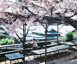 cherry blossoms, inspiration, and japan image