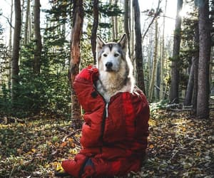 dog, nature, and picture image