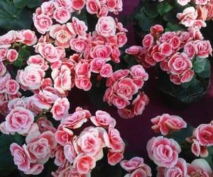 flowers love pink bloom image