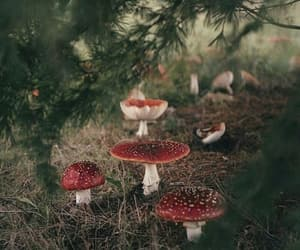 fly agaric, forest, and mushroom image