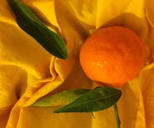 aesthetic, lemon, and orange image