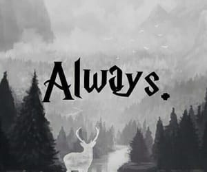 snape, potter, and quote image