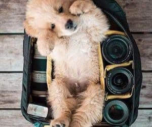 dog and cachorrito image