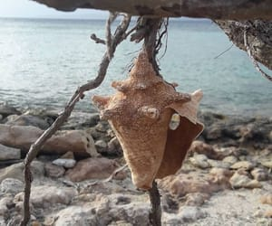 Caribbean, Island, and puerto rico image