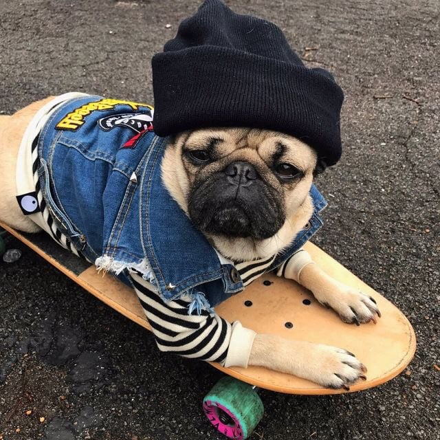 animals, skaters, and cool image