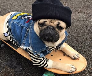 animals, cool, and dogs image