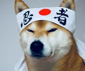 dog and japan image