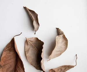 aesthetic, leaves, and brown leaves image