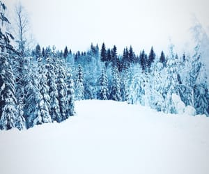 forest, Skiing, and snow image