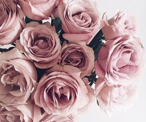 gold, pink, and roses image