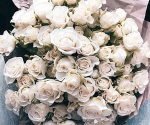flowers, rose, and plants image