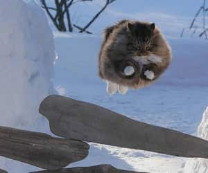 cat and winter image