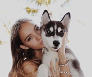 bali, dog, and inka image