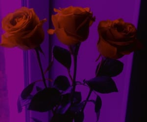 purple, roses, and red image