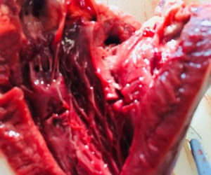 biology, dissection, and heart image