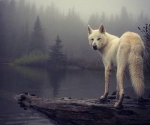 dog, forest, and wolf image