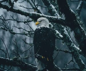 eagle, animal, and dark image