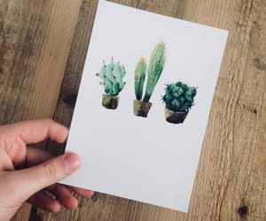 cacti, cactus, and plants image