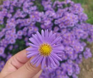 autumn, flower, and purple image