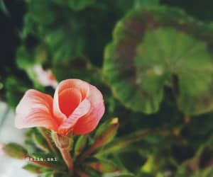 flower, pink, and green image