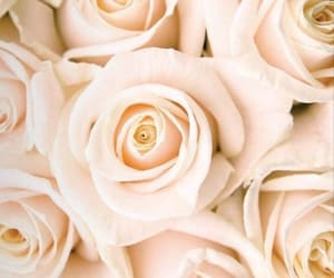 roses, wallpaper, and white image