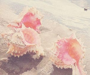 pink, beach, and shell image