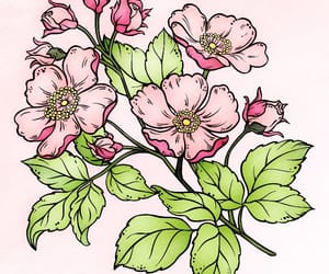 flowers, lover, and pink image
