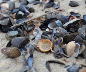 beach, holland, and seashell image