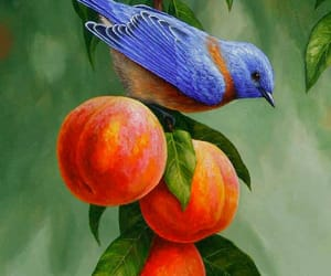 beautiful, bird, and drawing image