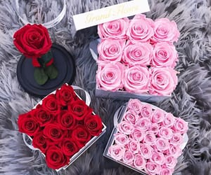 beautiful, flowers, and roses image