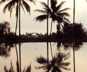 tropical, tumblr, and wallpaper image
