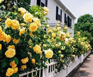yellow, flowers, and roses image