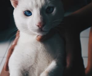 blue, cat, and gato image