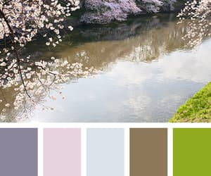 cherry blossoms, color, and colors image