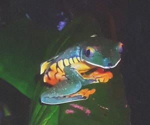 costa rica, rainforest, and frogs image