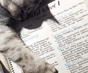 cats, motivation, and notes image