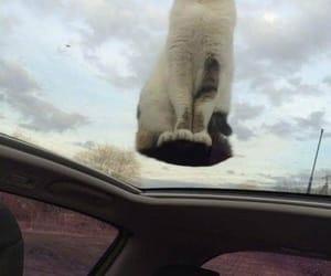 cat, gato, and vidro image