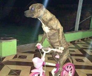 animal, zoeira, and bicicleta image