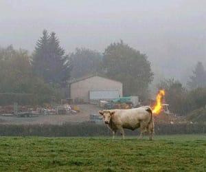 cow, poluição, and fim do mundo image