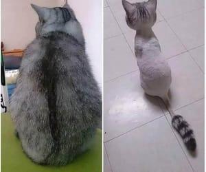 cat, gato, and pelado image
