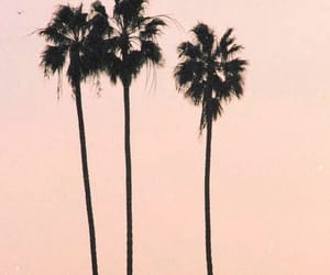 california, pink, and palm trees image