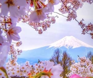 japan, flowers, and mountains image