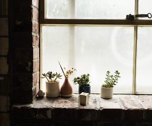 botany, gardening, and nature image